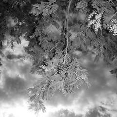 TERRA INCOGNITA (Grant Simon Rogers .) Tags: leica black london coffee caf cake angel leicadigilux2 softfocus sundaywalk austrian londinium justforfun sundaybest dayfornight softtouch kipferl terraincognita farcanal diessolis needtocleanmylens dassingendeklingendebumchen skytickler grantsimonrogers themanwhoflashedattrees cloudtickler sundayflashing angeltokingslandroad sundaytrousers theshamanicphotographer