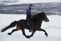Ni fra Jakobsgrden (kamilla iversen) Tags: horse kamilla fra icelandic ni iversen jakobsgrden istlt