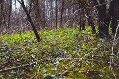 forest floor (Shandi-lee) Tags: trees brown ontario canada color colour green nature leaves yellow female forest canon eos grey daylight moss spring interesting flickr day photographer branches gray may eerie whitby daytime twigs mossy springtime 2014 floor canon light forest 7d natural cox 1585mm shandilee shandilee