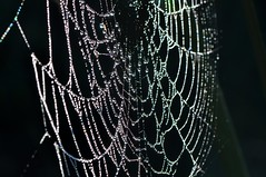 The web. (Victoria.....a secas.) Tags: macro web telaraa