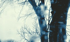 Snowing (Jenlynnifer94) Tags: snow moving snowing