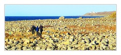 On the royal road 20150215_133624 (OK Gallery) Tags: road old sea norway stone gallery kings shore northsea february ok rogaland 2015 h varhaug steingjerde oddkhauge