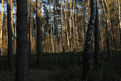 "Im Winterwald (ohne Schnee) 2015 • <a style=""font-size:0.8em;"" href=""http://www.flickr.com/photos/69570948@N04/16456698202/"" target=""_blank"">View on Flickr</a>"