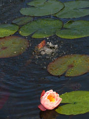 Pileta central Parque Isidora Cousio (Guillermo Feli) Tags: chile flower water hojas agua flor pileta lota parquedelota