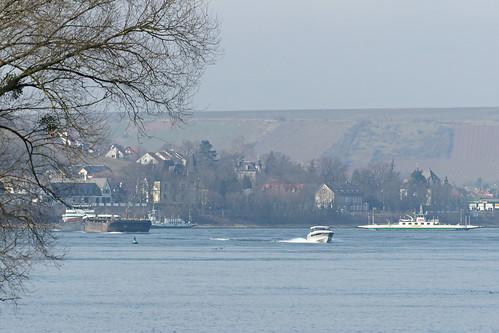 Rheinspaziergang bei Oppenheim
