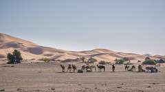 Back from the dunes (szhorvat) Tags: travel sahara sunshine sand desert dunes morocco resting caravan camels ergchebbi