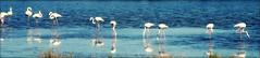 Punta del Moral. Ayamonte (Huelva) (Angela Garcia C) Tags: hidrologa vegetacin huelva geografafsica biogeografa avifauna puntadelmoral ayamonte