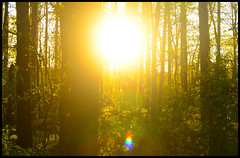 Forest Sunset III (Josh Rokman) Tags: nature outdoors nikond7000 swamp marsh forest sunset natural sun gold golden