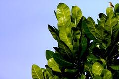 Hi I'm here (Ambon Sunbird #4 - Olived-Backed Female) (168tos) Tags: bird animal indonesia back olive nectar sunbird ambon