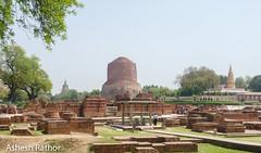 Ruins of Sarnath with Dhamekh stupa in the back (asheshr) Tags: india monument up nikon buddha buddhist buddhism varanasi sarnath banaras stuppa uttarpradesh historicmonument incredibleindia dhamekhstupa isipatana gautambuddha mrigadava rishipattana migadya d7200 nikond7200 historicalmonumant stuppaatsarnath