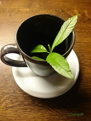 Gleich gibt es Eisenkrauttee (frenziM) Tags: food plant poetry tea