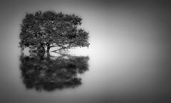 Natura, Minimal... (Minieri Nicola) Tags: art landscape natura minimal e riflessi bianco calma nero paesaggio blackewhite