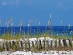Destin Oats and Sky 2015-3 (DGS Photography) Tags: florida destin miramarbeach gulfofmexico seaoats uniolapaniculata fence dune sanddune sea sky