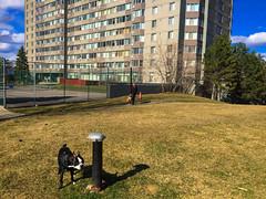 Architecture around Ottawa (lezumbalaberenjena) Tags: dog chien ontario canada boston architecture arquitectura ottawa perro terrier bully
