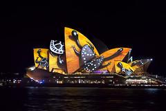 Sydney Opera House Vivid 1 (RoosterMan64) Tags: lights sydney vivid australia sydneyharbour indigenous sydneyoperahouse