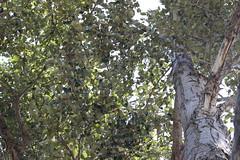 IMG_1860 (GabrielBlaisD) Tags: new summer ontario canada liskeard