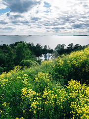 The Gulf of Finland (side rocks) Tags: ocean flowers sea summer plants cloud plant flower beach nature beautiful clouds finland landscape landscapes helsinki meadow nordic finnish scandinavia beautifulnature finnishnature finnishsummer