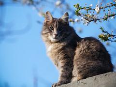 Street cat 143 (Yalitas) Tags: pet cats cat canon kat feline chat kitty gato felino katze katzen kot kedi kass gatta streetcat kotka  kocka  katte  katzchen kottur