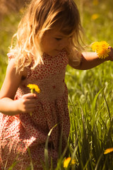 Flower girl... (Marla Nutbrown) Tags: morning flowers sun girl grass spring little dandelions childphotography naturallightphotography marlanutbrownphotography