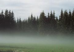 (Ivo Hintnaus) Tags: forest wood czech fog tree mist sky