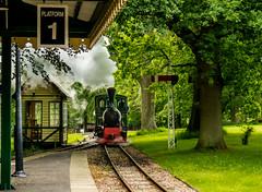 Bredgar & Wormshill Railway June 2016 _001 (Anthony Britton) Tags: bredgarwormshillrailway canonesom3 55200mlens 1122mlens 1855mlens sittingbourne kent steamlocomotives thomashornbeamengine tractionengines agriculturaltractors