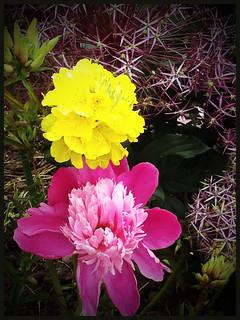 My three favourite flowers.