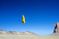 Freeflight Trip 2015 - 50 (Dave Womach) Tags: new red sky birds rock landscape mexico utah rocks flight free parrot moab macaw canyons freeflight birdtricks birdtrickscom