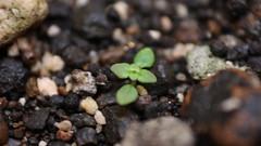 Planta cualquiera (Csar-Ivn) Tags: rosa vida nopal macrofotografa unmilagro fotografamacro explorandomundomacro csarivn plantacualquiera wwwcesarivancom