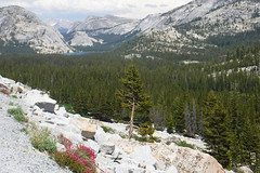 Yosemite National Park. Along  Highway 120 (cali4niahiker) Tags: yosemite highway120 meadows wildflowers tuolumnemeadows inyonationalforest tenayalake