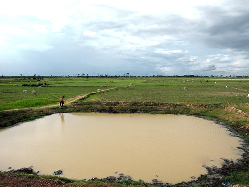 A fish pond in paddy field,  Cambodia. Photo by Jharendu Pant, 2009.
