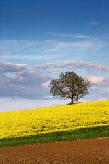 spring colors (Dennis_F) Tags: blue sky cloud green colors yellow clouds germany deutschland spring colorful blossoms himmel wolken gelb grn blau karlsruhe raps farben frhling farbenfroh weingarten rapseed sallenbusch frhlingdeutschland