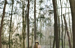 Reasons to Breathe (Rachel.Rosemarie) Tags: birthday trees sky color green nature girl up forest model woods looking branches lookingup bow trunks blondehair pinetrees teenage nikon50mm18g nikond5100