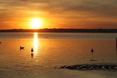 Last Night - Swan Bay (LittleMok) Tags: sunset seagulls golden australia victoria swanbay 10may13