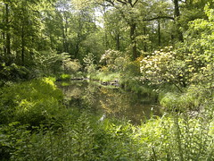 Mysical Woodland Pond (Gazzmann80) Tags: wood trees nature forest landscape pond