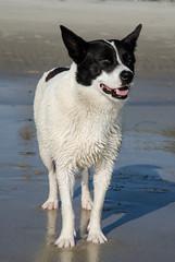 Perros | Los Ropes | Retratos de la Pandilla (Stephanie Cabrera Fotos) Tags: mxico nikon retrato playa bajacalifornia perros animales rosarito akita fotografa stephaniecabrera d7000 nikond7000