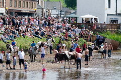 Appleby Horse Fair 2013 (William Matthews Photography) Tags: horse nikon crowd fair traveller cumbria gypsy appleby rivereden applebyhorsefair nikond7000