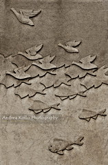 Evolution #2 (Andrea Kollo Photography) Tags: sculpture fish bird nature birds geese fineart naturephotography naturephoto fineartphotograph natureprints andreakollo andreakollophotography natureartprints sculpturalfineart andreakollofineart