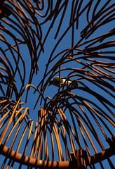 Arboretum play ground - 27/7/2013 (Orangedrummaboy) Tags: wood sky playground kids outdoors play au australian australia arboretum slide climbing canberra aussie dslr downunder davidjburke canberra100 orangedrummerboy uploaded:by=flickrmobile flickriosapp:filter=nofilter davidjohnburke© orangedrummaboyphotographycanberra djburke httpswwwfacebookcomorangedrummaboy thmccit httpstwittercomorangedrummaboy