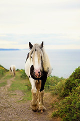 A lonely pony on the top of the hill (Sigita JP) Tags: camera light summer sky horse water closeup see evening dof view hill wicklow poney impressedbeauty