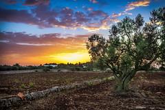 Ulivo all'alba (necozio.com) Tags: alba arancione ulivo
