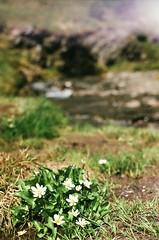 (Grace Gockel) Tags: park summer canada mountains film analog vintage olympus national banff analogue om1n