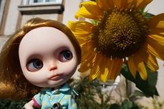 A tiny sunflower