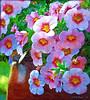 2013 - GOOD MORNING WORLD (SAMcRAE PHOTOGRAPHY) Tags: paintedflowers