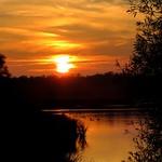 Sunset-Geese thumbnail