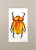 Jewel Scarab (Oxana Kostromina) Tags: nature ink bug watercolor insect beetle scarab jewelscarab