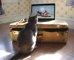Wic likes yoga (SliderArts) Tags: yoga cat mac