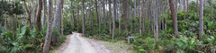 Road Through the Trees || NSW South Coast (edwinemmerick) Tags: road trees panorama nature forest canon landscape eos australia palm palmtrees jungle nsw 7d edwin depotbeach emmerick edwinemmerick