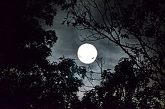 2013-10-17 (1) luna (JLeeFleenor) Tags: trees moon silhouette clouds photography photos luna fullmoon nightsky vision:outdoor=0913 vision:sky=0595