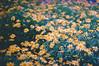 (Rob Aparicio) Tags: old flowers blur flores flower film daisies analog analógica flickr bokeh olympus desenfoque margaritas yellowflowers analogic analógico olympusom20 tumblr robaparicio robertoaparicio robaparicioflickr flickrtotumblr