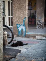 *** (Tania's Tales) Tags: street city urban cats animal cat blackcat mammal graffiti feline drawing streetphotography stray exploration      fotografiastradale taniastales